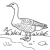Goose Coloring game